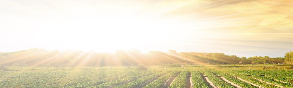 Cultivos bajo el sol