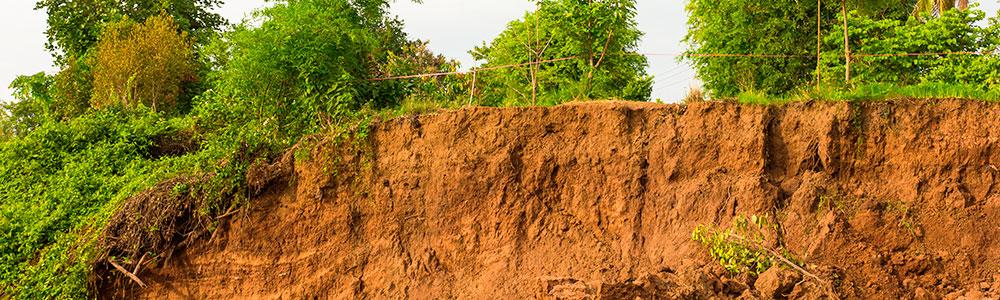 Terreno afectado por la salinidad