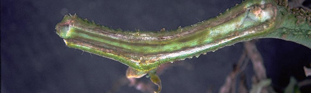 Planta con Fusarium